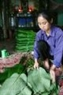 Chị Phạm Thị Huề đang chọn những chiếc lá dong to nhất, đẹp nhất dành để gói bánh trưng cho gia đình dâng tổ tiên trong Tết này.