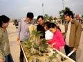 Посетители ярмарки рассматривают миниатюрные декоративные растения