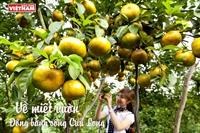 Về miệt vườn Đồng bằng sông Cửu Long