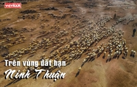 Trên vùng đất hạn Ninh Thuận