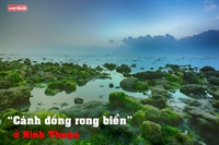 """""""Cánh đồng rong biển"""" ở Ninh Thuận"""
