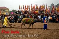 Con trâu trong đời sống văn hóa Việt