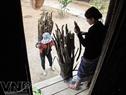 Dù có giá lạnh, dân làng xã Chà val, huyện Nam Giang, tỉnh Quảng Nam vẫn vào rừng lấy củi về dự trữ làm chất đốt và sưởi ấm.