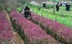 Một góc làng Nhật Tân rực đỏ các sắc hoa.