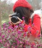 Giới trẻ Hà Thành không bỏ lỡ cơ hội ghi lại những khoảnh khắc đẹp nhất của vườn hoa bách nhật.