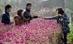 Và cùng nhau chụp ảnh lưu niệm bên vườn hoa.