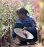 Vì thế người trồng hoa ở Nhật Tân phải ngày ngày theo dõi vườn hoa trong nỗi lo chờ Tết.