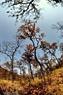Rừng khộp Tây Nguyên giữa mùa khô