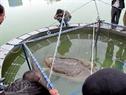 Rùa được chuyển vào bể bơi thông minh để chữa trị.
