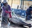 Sau khi sơ chế cá được rửa sạch.