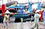 Các thương lái thu mua cá ngay tại cảng.