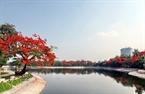 Công viên Thống nhất - Hà Nội tràn ngập màu đỏ của hoa Phượng.