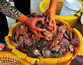 So diep (Chlamys nobilis), mariscos favoritos vendidos en Bai Ngang, Mui Ne.