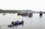 Cá tươi đánh bắt về được cung cấp để nuôi cá lồng.