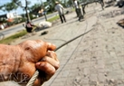 Lõi của dây được làm bằng sợi thép cuộn. Những sợi thép này ngư dân phải bôi mỡ…