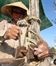 """Ngư dân Nguyễn Văn Hùng cho biết: """"Ngư dân đã ứng dụng hàng trăm loại dây để đi biển nhưng không có loại dây nào có đủ độ dai, bền chắc bằng loại dây tự chế này. Chúng được các làng chài vùng biển Quảng Nam, Huế, Quảng Ngãi… chế tác như bùa hộ mệnh cho những con thuyền ra khơi""""."""