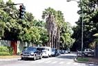 Hay calles que parecen un parque de árboles verdes.