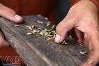 Les grains de riz sont cuits lorsque leur couleur vert est devenue blanche, les balles se décollent et on sent une odeur. (Photo: Trân Thanh Giang).
