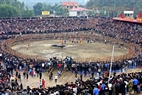 The buffalo-fighting arena in Hai Luu draws thousands of visitors.