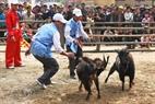 Los cabros en Hoang Su Phi son muy fuertes.