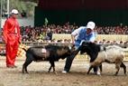 Un cabro no quiere participar en la lucha y su dueño debe animarlo.