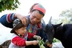 昔からヤギは高山地のホアン・ス・フィの人々の生活と親密に結びついている。