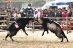 2匹のヤギは互いに突っ込んで最初のビートをした。