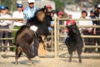 茶色のヤギは権威を示して、黒いヤギは小首を傾げて、戦いの準備をしている。