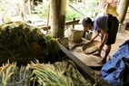 During harvest, the older people help their children with light work, such as winnowing rice. Photo: Thong Thien