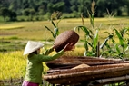 The Thai people often dry rice in flat baskets. Photo: Viet Cuong