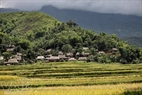 Harvested fields are ready for new cultivation. Photo: Viet Cuong