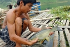 Black carp brings high economic value to local people.