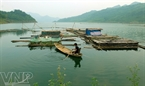 A raft of fish cages costs about 30 million VND and its durability is about 3 years.