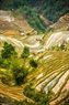Mùa đổ nước ở xã La Pán Tẩn, huyện Mù Cang Chải