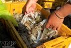 Один из видов морепродуктов продаётся в Жаохай