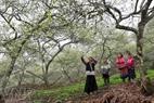 Children shoot birds by sling in a garden of plum trees.