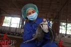 The centre applies many measures to protect the poultry from being affected by bird flu.