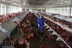 The centre annually provides the market with over 4 million fowl.