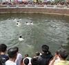 代表十三寨区的13名年轻人下池塘打鱼供祭城隍。