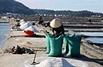 Mỗi bao muối nặng khoảng 50kg bán cho thương lái khoảng 100 nghìn đồng.