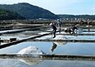 Mỗi vuông muối ở cánh đồng muối Sa huỳnh thường có diện tích khoảng 10 mét vuông và nhân lực chủ yếu để cánh tác muối là phụ nữ.