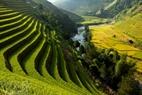 Từ trên cao nhìn xuống, thung lũng ruộng bậc thang như một bức tranh nhiều màu sắc với màu vàng của lúa, màu xanh của núi rừng tô điểm.