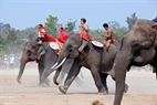 A fierce competition of three elephants, Thong Ngam, Da Ly and Kham Ngoac,  in the final race.