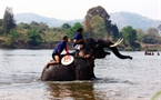 Swimming is the most difficult competition for the elephants.