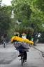 Peach blossoms delivery bikes roam around Hanoi.