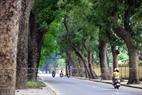 Des rangées de khayas pluricentenaires dans la rue Hoàng Diêu.