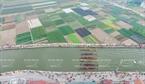 从高处看的2015年丹村赛船会全景。 仲海  摄