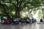 Vào mỗi buổi chiều, có khoảng hơn hai mươi họa sĩ hành nghề vẽ tranh ký họa tại Hồ Gươm.