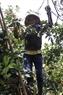 Фермер используeт лестницy, чтобы подняться высоко на деревья и собрать фрукты.