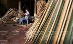 Van Hoi villagers sun-dry bamboo sticks to make paper horses along the village's lanes. Photo: Thong Thien